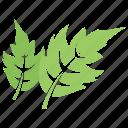 green leaf, leaf, leaf design, leaf shape, redhaw hawthorn icon