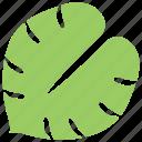 green leaf, leaf, leaf design, philodendron split leaf, tropical leaf icon