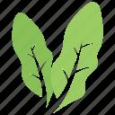 elaeagnus angustifolia leaves, foliage, green leaves, leaves, two elaeagnus icon