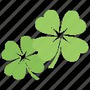 clover leaf, four-leaf clover, lucky clover, shamrock flowers, trefoil plant icon