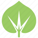 green leaf, large-leaved lime, leaf design, leaf shape, tilia platyphyllos leaf icon