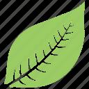 green leaf, hevea brasiliensis leaf, leaf, leaf design, leaf shape icon
