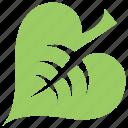 green leaf, heart-shaped leaf, leaf, leaf design, linden leaf icon