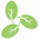 cashew leaves design, moringa leaves, oblong leaves, ovate leaves, spatulate leaves icon
