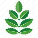 ash, foliage, leaf, leaves, spear, tree icon