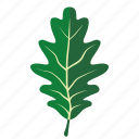 foliage, leaf, oak, oakleaf, romania, tree icon
