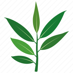 bush, eucalyptus, gum, leaf, tree, willow icon