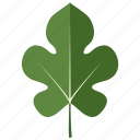 leaf, leaves, mulberry, tree icon