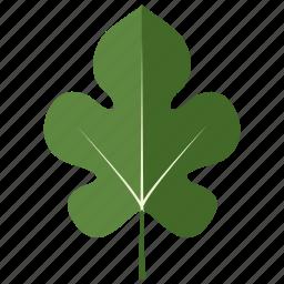 leaf, leaves, mulberry, tree icon