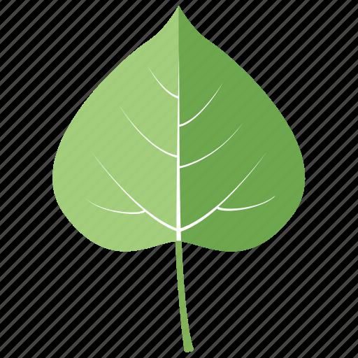 aspen, botanical, garden, leaf, leaves, quaking, tree icon