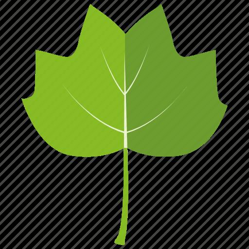 aspen, botanical, garden, leaf, nature, poplar, tree icon