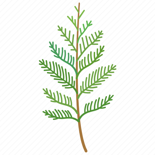cedar, conifer, frond, leaf, nursery, ornamental icon