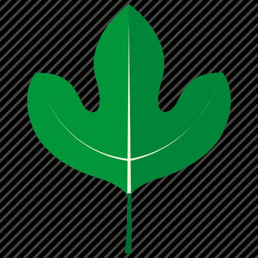 botanical, garden, leaf, sassafras, scent, tree icon