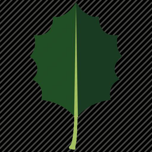 christmas, druid, festive, holly, ilex, leaf, yuletide icon