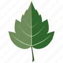 foliage, hawthorn, leaf, leaves, tree icon