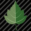 foliage, hawthorn, leaf, leaves, tree