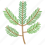 botanical, cedar, frond, leaf, leaves, nature, oil icon