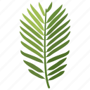 conifer, foliage, frond, leaf, pine, yew icon