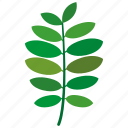 fabaceae, leaf, leaves, natural, nature icon
