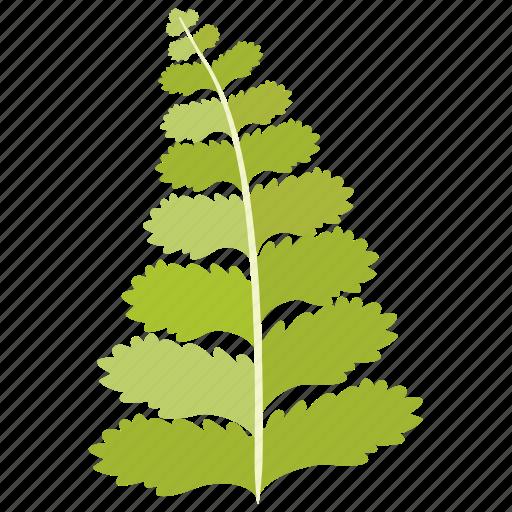 bean, fabaceae, frond, leaf, legume, pea icon
