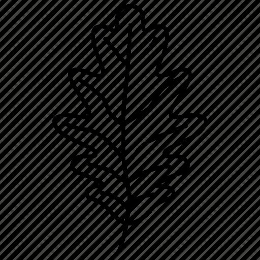 foliage, leaf, oak, oakleaf, romania, tree icon