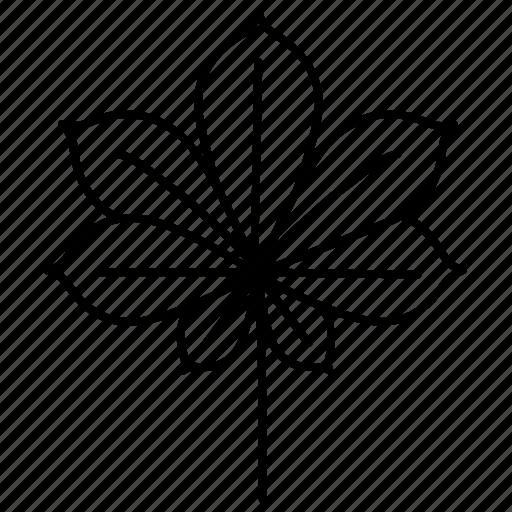 botany, chestnut, horticulture, leaf, leaves, tree icon