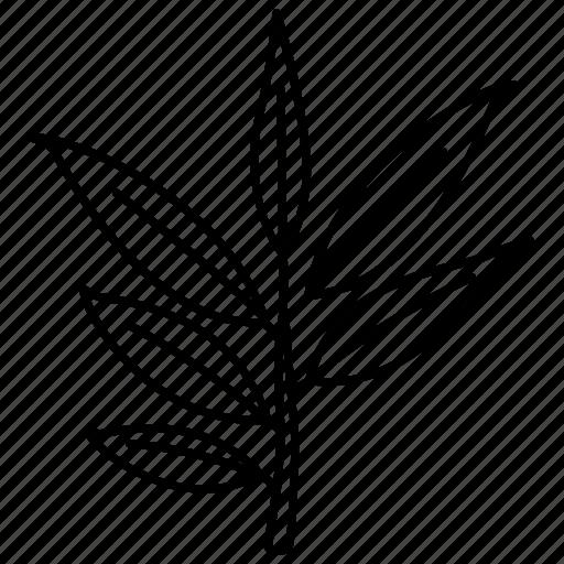 bush, eucalyptus, gum, leaf, tree, willow icon