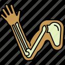 anatomy, arm, body, bones, limb icon