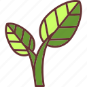 botanical, garden, leaves, nature, plant icon