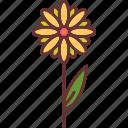 blossom, daisy, flower, nature. botanical, petals icon