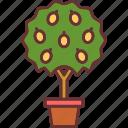 blossom, botanical, garden, lemon tree, nature, pot icon