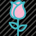 blossom, botanical, flower, garden, nature, rose icon