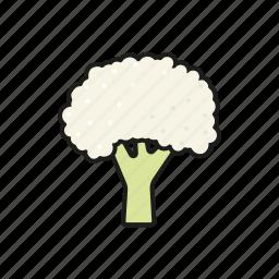 cauliflower, food, vegetables icon