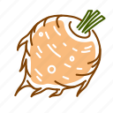 celery root, food, root, vegetable icon