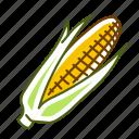 cob, corn, food, vegetable