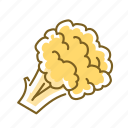 cauliflower, food, vegetable icon