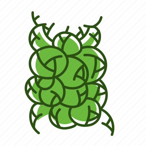 brussels sprouts, food, vegetable icon