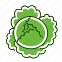 cabbage, food, savoy cabbage, vegetable