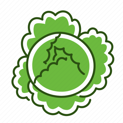 cabbage, food, savoy cabbage, vegetable icon