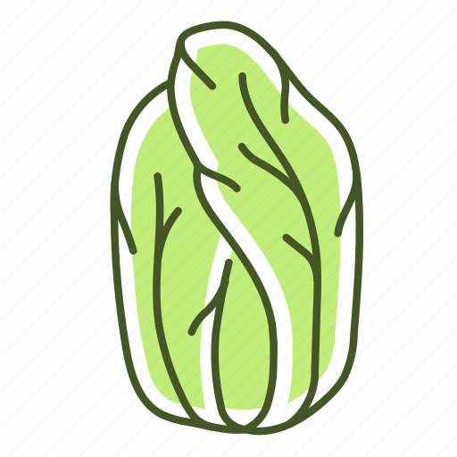 chinese cabbage, food, lettuce, salad, vegetable icon