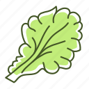 food, leaf, lettuce, salad, vegetable icon