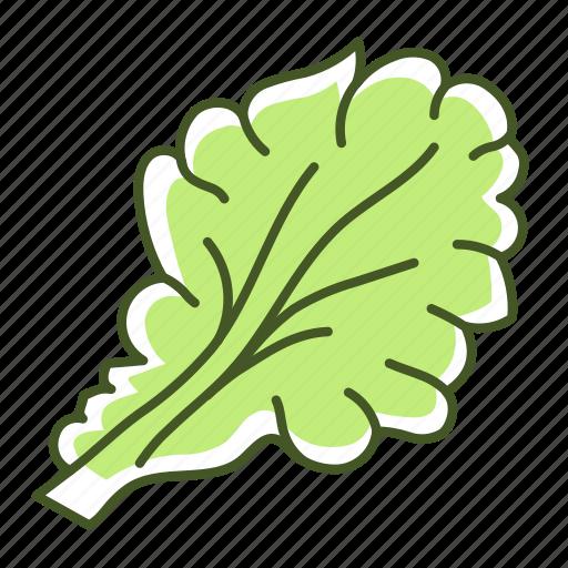 food, leaf, lettuce, salad, vegetable icon