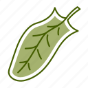 food, leaf, sorrel, vegetable icon