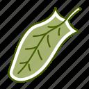 food, leaf, sorrel, vegetable