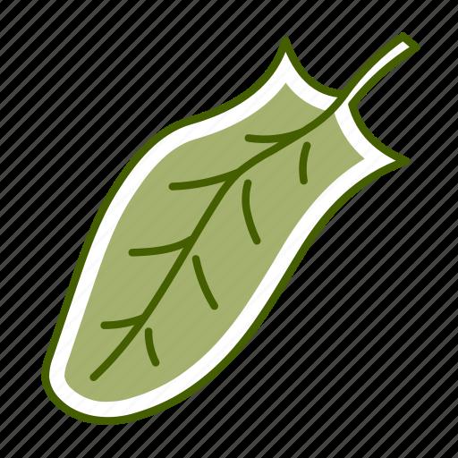 food, leaf, sorrel, vegetable icon