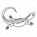 animal, isolated, line, lizard, nature, outline, reptile icon
