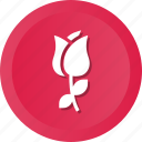 dsy, floral, flower, nature icon
