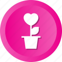 concept, flowers, heart, love, plant, romantic icon
