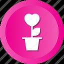 concept, flowers, heart, love, plant, romantic icon