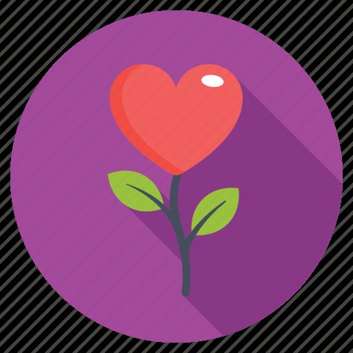 heart flower, heart rose, in love, love flower, proposal icon